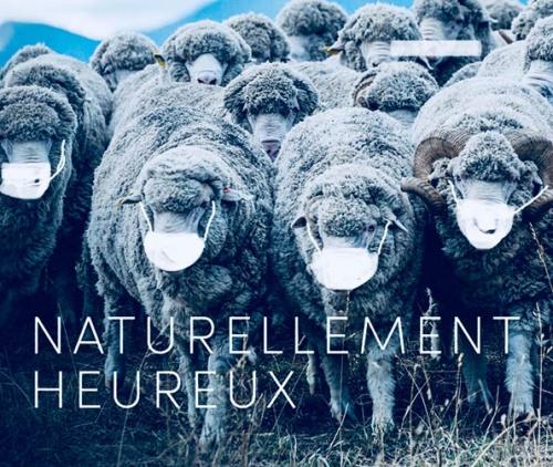 Meme-humour-moutons-masques-covid-19-de95a-f43ac.jpg