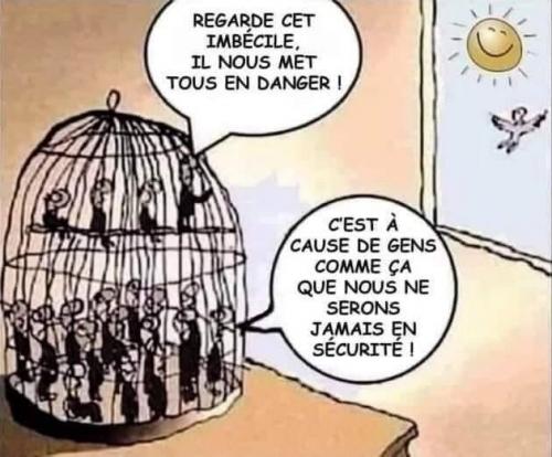 Oiseaux en cage.jpg